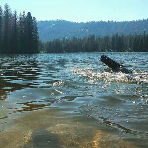 Open water swim at Hume Lake